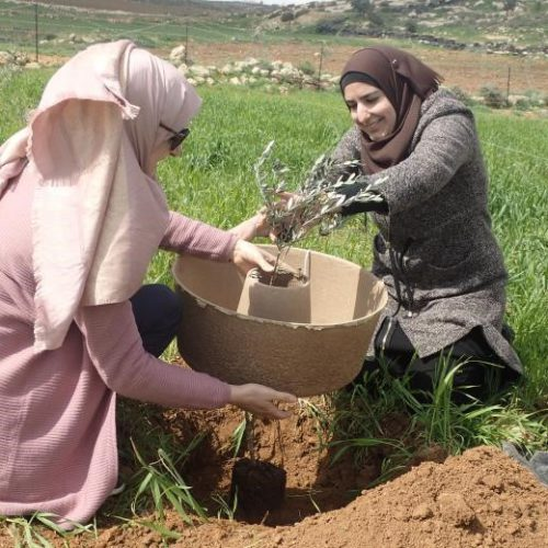 woman cocoon planting